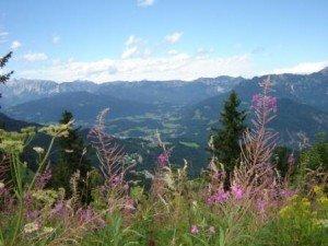 Kräuterwanderung in den bayerischen Bergen