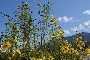 Sommerwiese in den Bergen im Tölzer Land