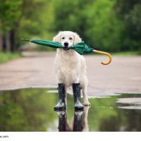 Bad Tölz / Regen / Schlechtes Wetter -trotzdem gute Laune