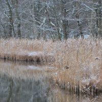 gesund und munter durch den Winter