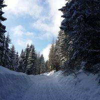 Pferdeschlittenfahren durch verschneite Landschaften